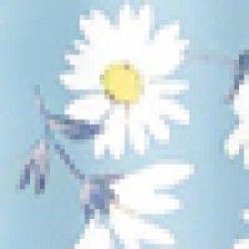 Floral Daisy